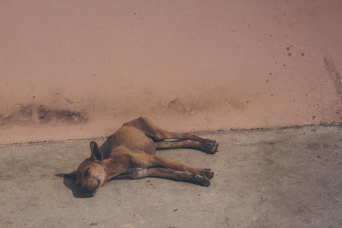 Dogs of Myanmar