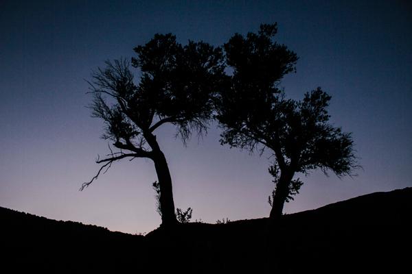 Olive trees, Lissos, Crete