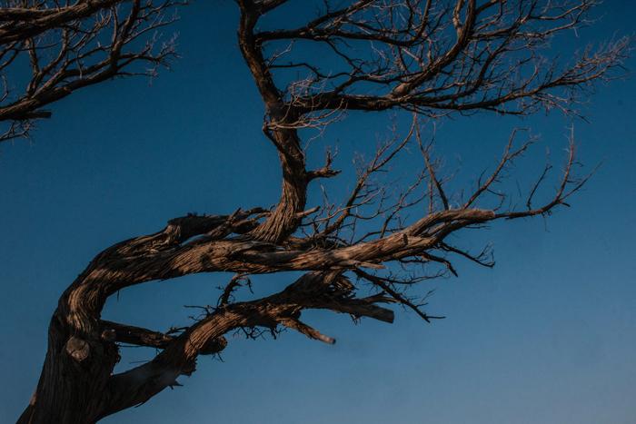 Dead tree in Elafonisi, Crete
