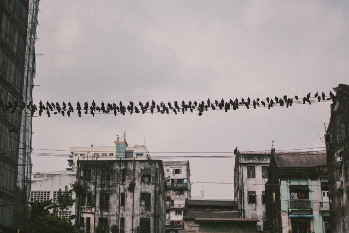 Pigeons, Yangon, Myanmar