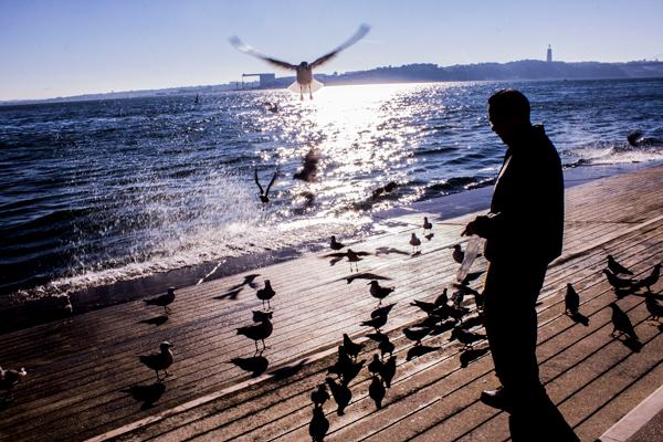 Seagulls, Lisbon