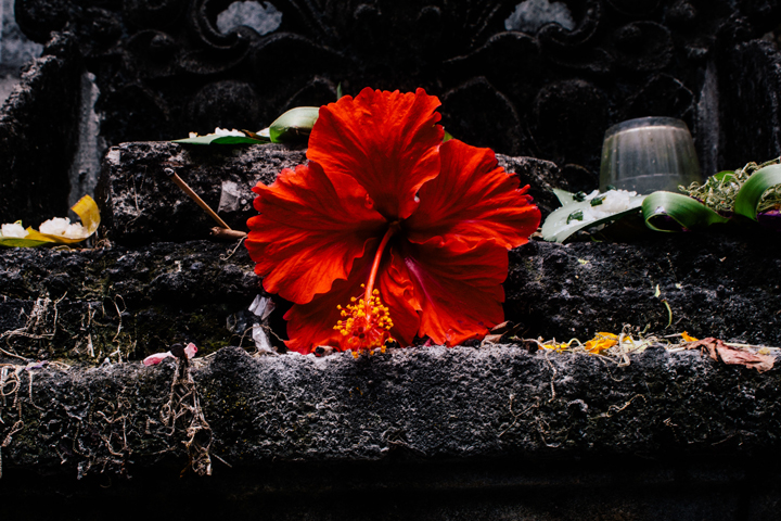 Red hibiscus offering, Bali