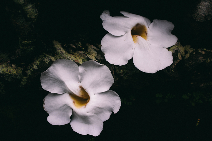 White flowers, Bali
